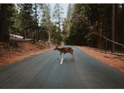 collision repair, animal accident
